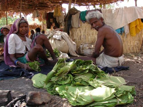 Madhya Pradesh forest department violates FRA, seizes tendu leaves from tribals