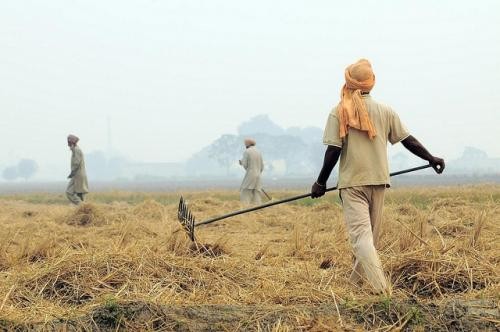 Farmers preparing to burn crop residues in Punjab Credit: Neil Palmer/CIAT