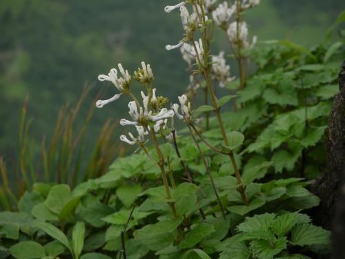 Rare plant species rediscovered in Western Ghats after more than 100 years