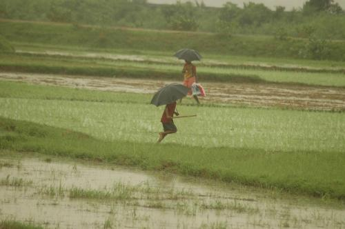 Indian monsoon has intensified since 2002; trend will persist in coming years: study