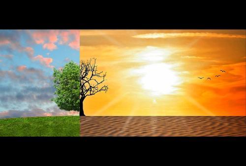 जलवायु परिवर्तन के प्रभाव से बचा सकती हैं बाजरे की संकर किस्में