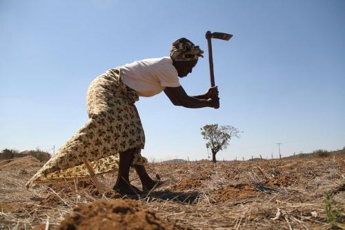 Conservation agriculture enhances soil health, improves productive capacity and conserves water