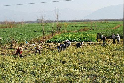 Agricultural biotechnologies necessary to defeat hunger, poverty in Asia-Pacific