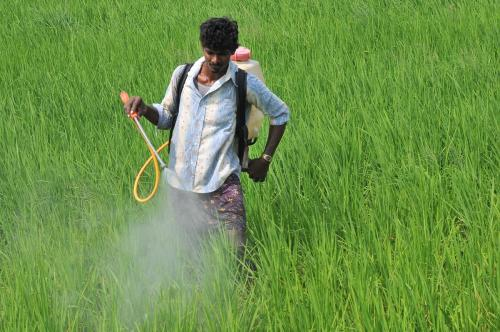 Farmers' rights grossly violated due to lack of awareness on pesticide spraying: NHRC