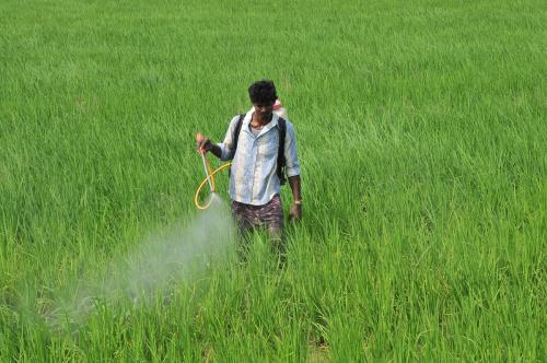 Pest attacks on rise across India, yet no discussion on spurious pesticides