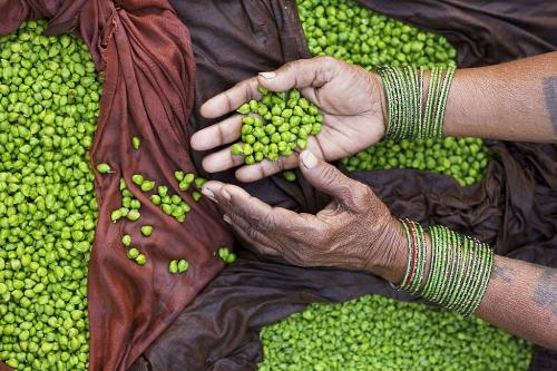 Centre levies 50% import duty on peas, likely to boost domestic prices