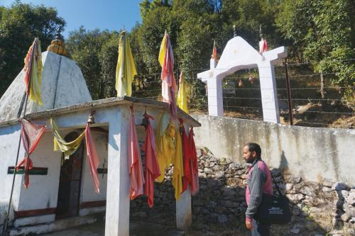 Himalaya's magical grove