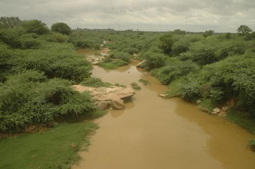Punjab bans sale of toxic pesticides; CSE urges similar necessary action by the Centre