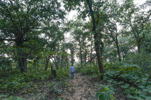 India's total forest cover increases by 1%: State of Forest Report 2017