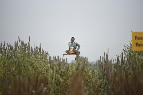 Millets make a comeback in rural areas