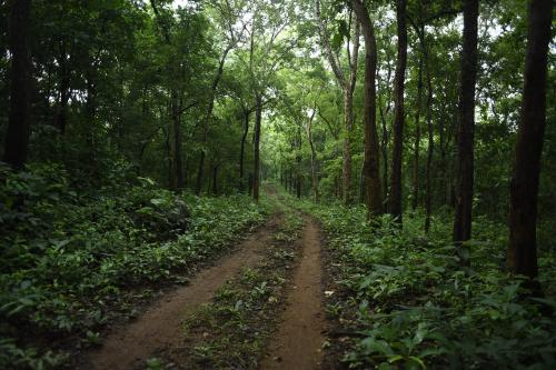 Integrating forests with agriculture crucial to sustainable development