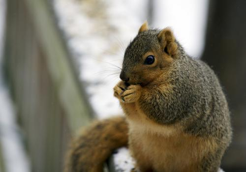 Squirrels now use plastic to build their nests