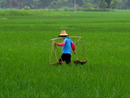 China's progress in sustainable farming: 20.9 million farmers, 37.7 million hectares covered
