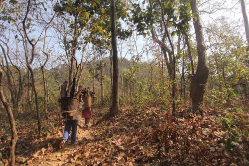 Critical Wildlife Habitat guidelines issued; NTCA order superseded