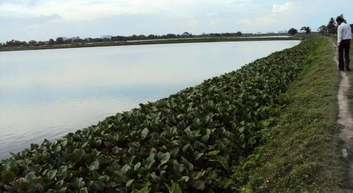 Current water management system ignoring nature-based solutions: UN report
