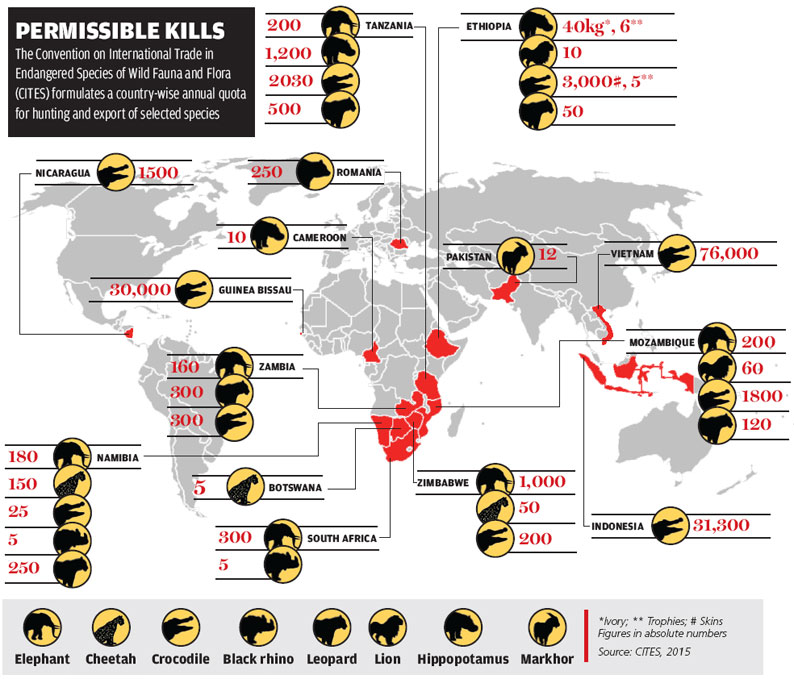 tiger extinction consequences