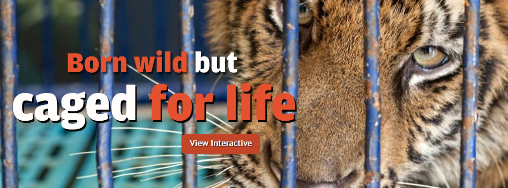 Born wild but caged for life