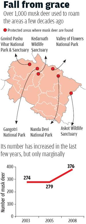 Musk deer population has increased over the years, but only marginally  (Source: Uttarakhand forest department)