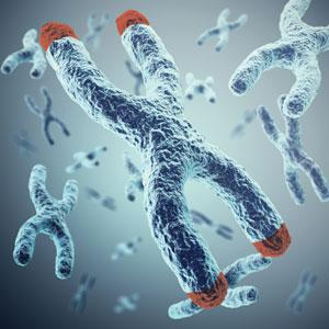Telomeres are tiny crowns at