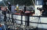 Fish production from aquaculture is up but no improvement in marine life