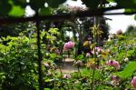 Climate change is happening in your garden: here's how to spot it