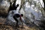 Clear and collect Chir pine needles to prevent forest fires: parliamentary panel