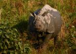 Trouble in India's rhino paradise