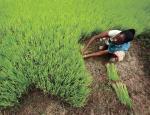 हरित क्रांति: कैसे पड़े आत्मनिर्भरता के बीज
