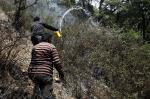 Climate change could deal a blow to carbon storage capacity of forests: study