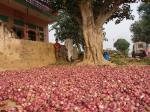 Low food inflation is bad news for farmers
