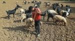Kerala, Karnataka cannot avail drought assistance despite being stricken by drought