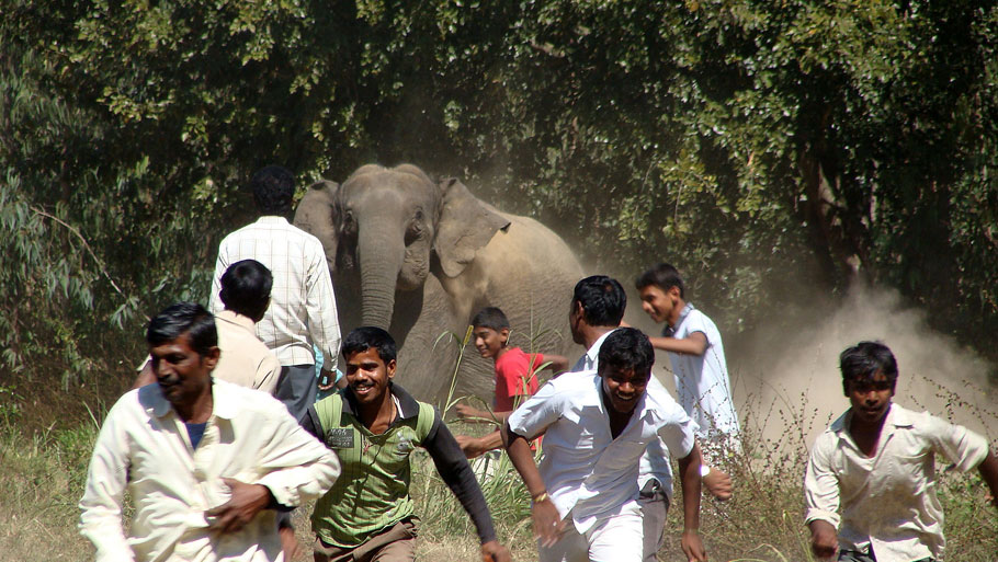 Man v elephant