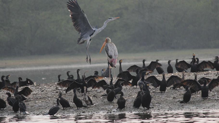 Soor Sarovar bird sanctuary in peril