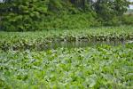 MoEFCC proposes new draft rules on wetland management