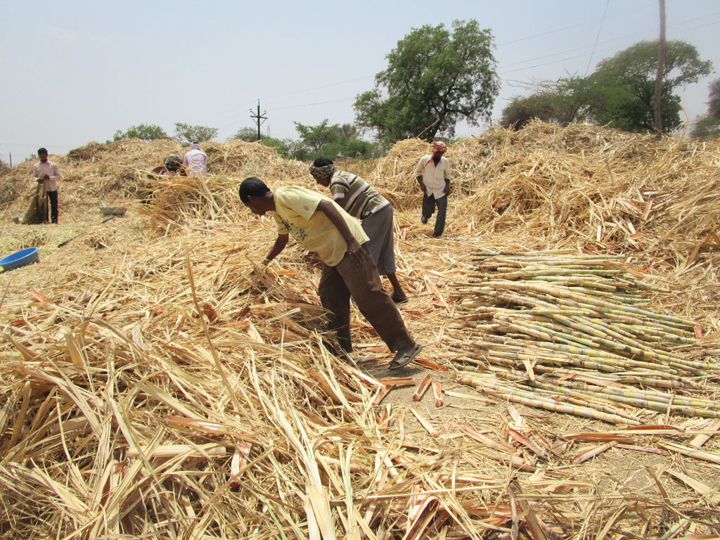 Dried