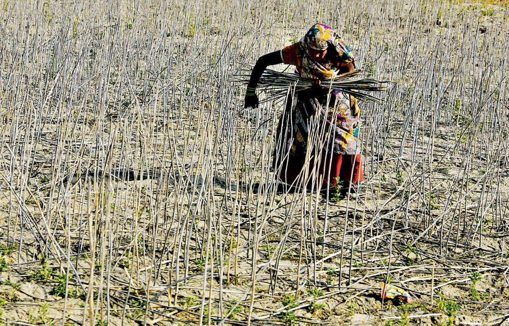 Minimise crop risk