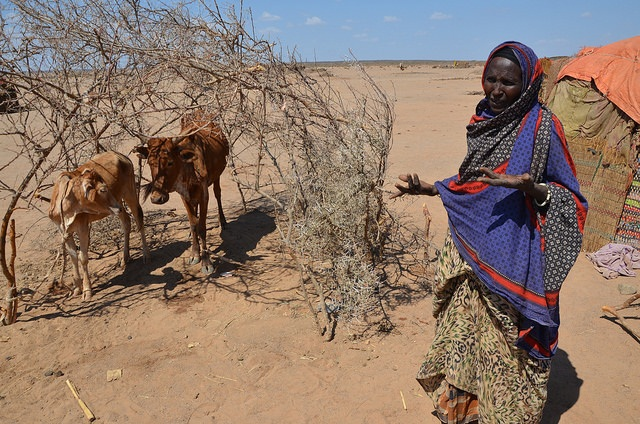 El Niño has lowered crop prospects in many African countries 