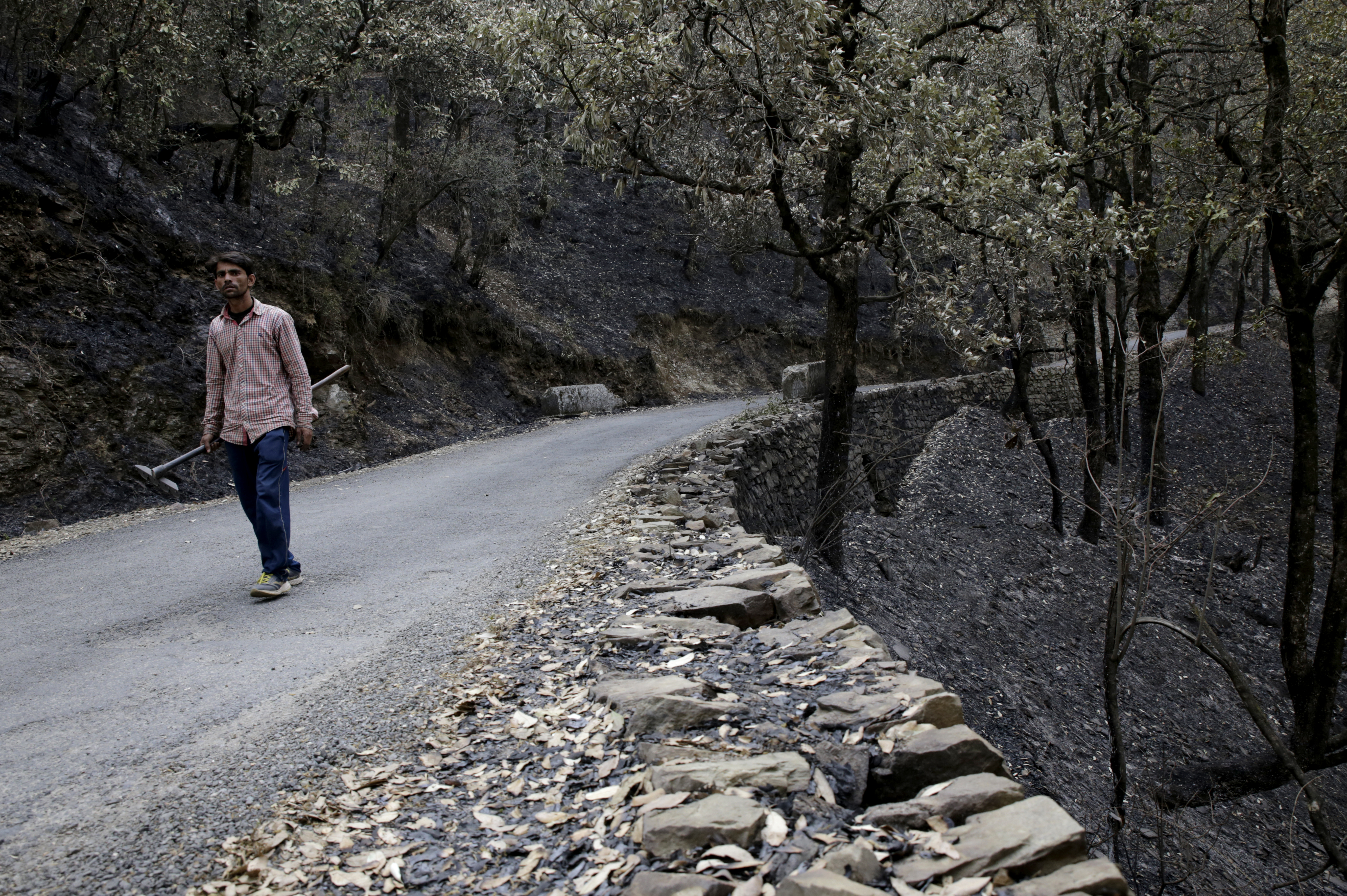 Forest workers have been working tirelessly to put an end to the devastating fires. Kundan, a forest worker, walks through a part of the forest destroyed by fire