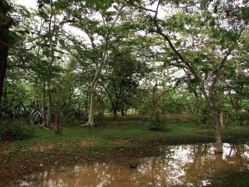 Chhattisgarh cancels forest rights of tribals in Surguja