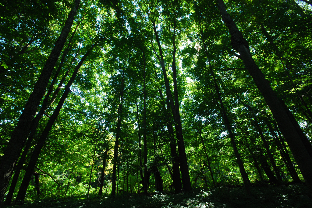 Now, a web tool to help estimate forest biomass and carbon stock