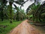 Environmentalists hail Indonesia's moratorium plan on new palm oil permits, mining operations