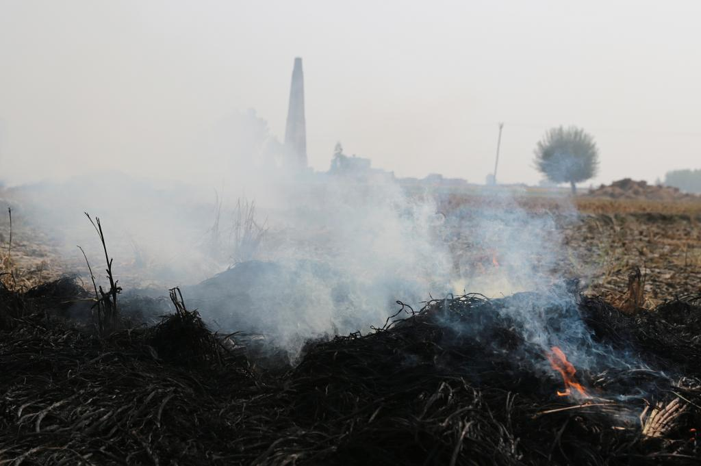 To prevent air pollution as a result of paddy burning, the NGT has directed five states to pay subsidy on crop residue extracting machines Credit: Vikas Choudhary