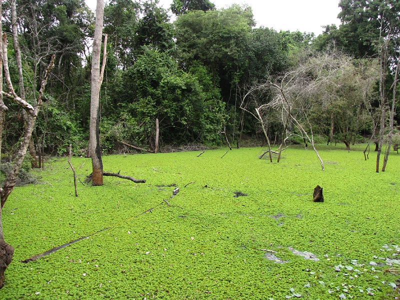 Scientists studied samples from permanent and seasonal wetlands of Cambodia (Photo: Jemima Rohekar)