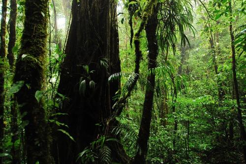 World set to lose India-sized forest cover by 2050