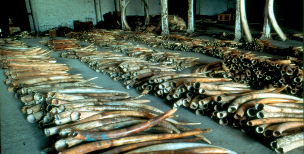 Why the new UN resolution to fight illegal wildlife trade is historic