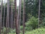 Parliamentary panel gives more teeth to Compensatory Afforestation Fund