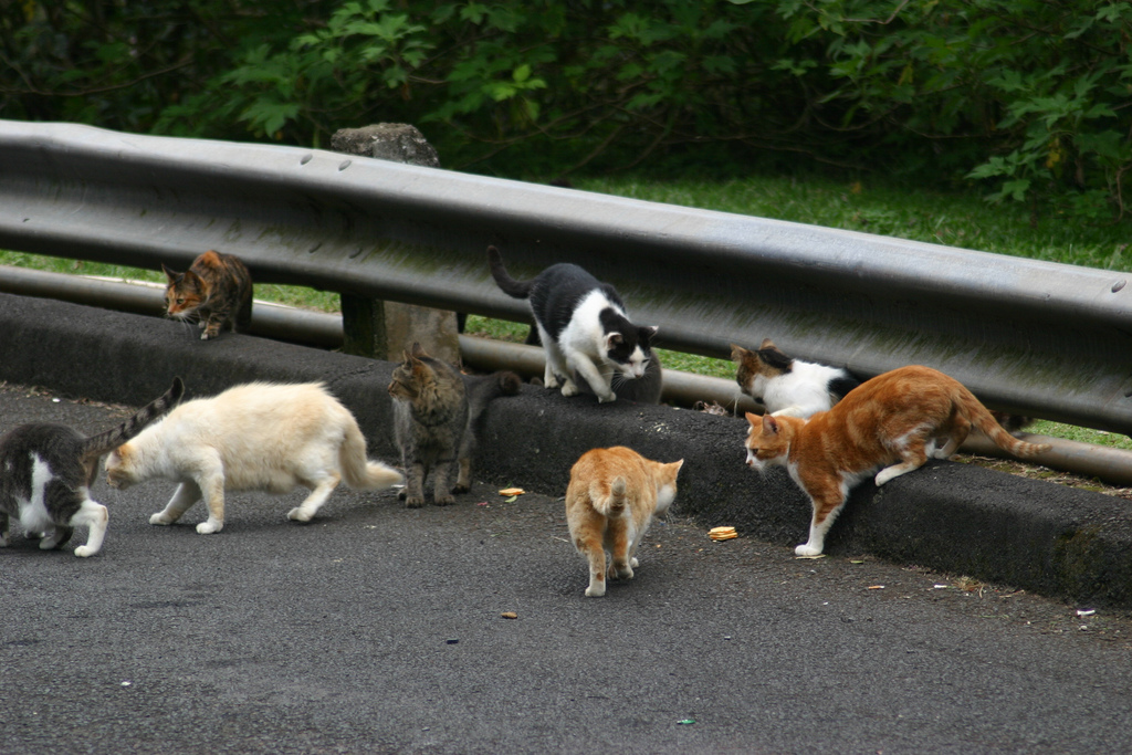 Two million feral cats to be killed to save Australian wildlife
