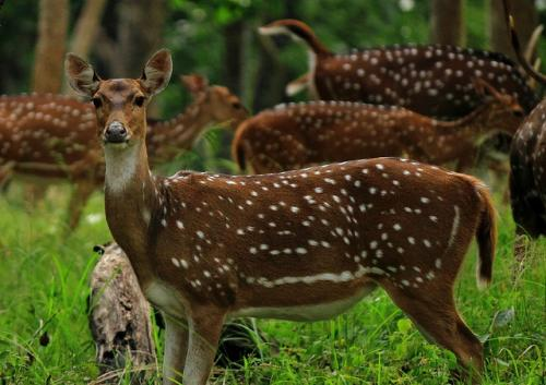 Environment ministry's new advisory seeks to protect wildlife
