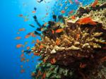 Dying coral reefs, impacts of El Niño and other news from this week