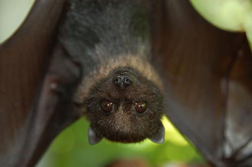 Scientists create map showing bat-human viral transmission